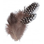 Feathers - Guinea Fowl 10g