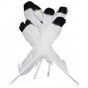 Feathers White/Black Tip 10pk