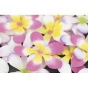 Frangipani Flowers 20pk