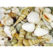 Sea Shells (1Kg)