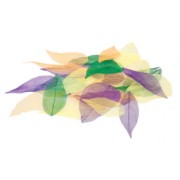 Skeleton Leaves Coloured (Pack of 100)