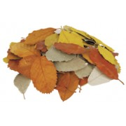 Natural Leaves (Pack of 90)