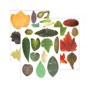 Crafty Leaves 266s Assorted